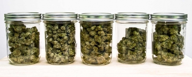 Fascinating 8 Important Dos And Donts Of Storing Weed Best Weed Storage Containers